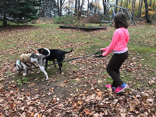 Outdoor Fun with Your Dog, by Dr. Peel
